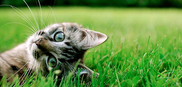 Понос у котенка в 4 месяца