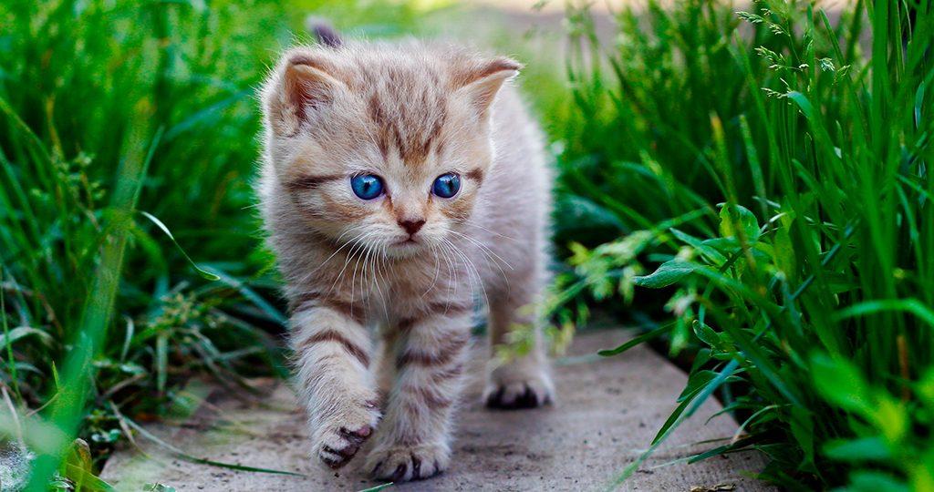 Понос у котенка в 4 месяца – причины и лечение