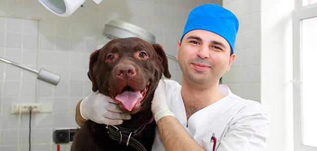 Симптомы острого расширения желудка у собак