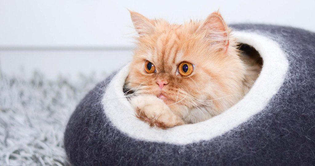 Препараты от глистов у кошек