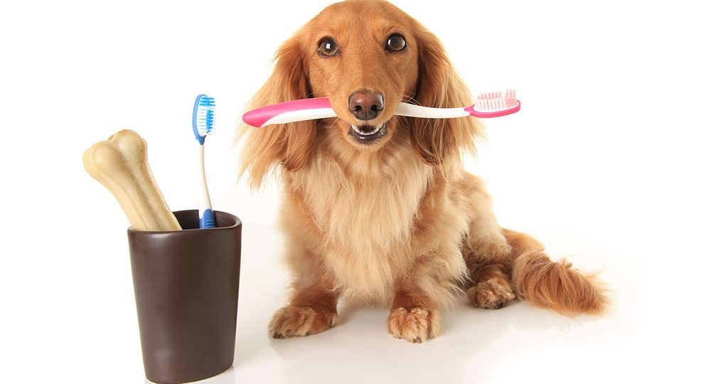 Зубной камень у собак – как почистить и чем опасен