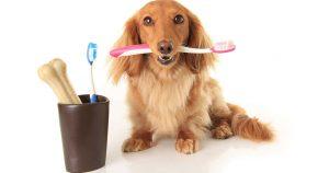 Зубной камень у собак – чистка и опасности