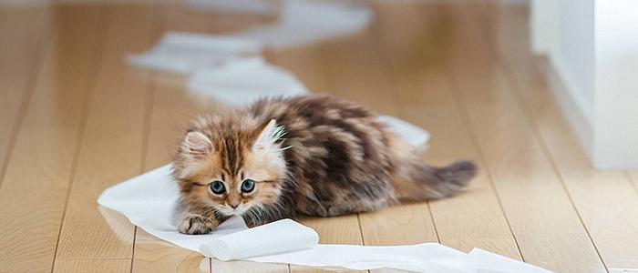 Пол котенка