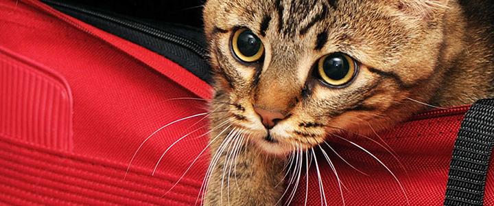 Путешествия с котом
