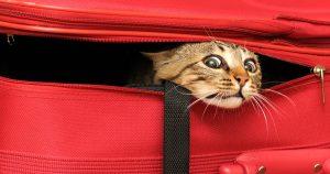 Как путешествовать с кошкой – подготовка и список вещей