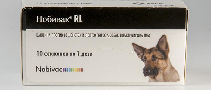 Лептоспироз у собак прививка