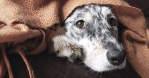 Лептоспироз у собак – причины, симптомы и лечение