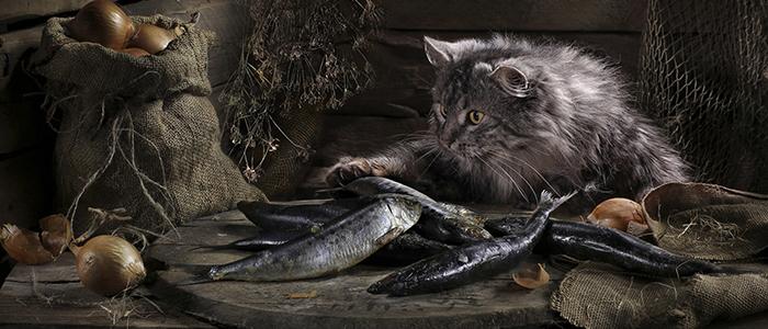 Можно ли кошкам сырую рыбу
