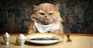 Можно ли кошкам рыбу – за и против