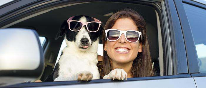 Как путешествовать с собакой в машине