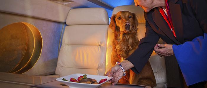 Как путешествовать с собакой на самолете