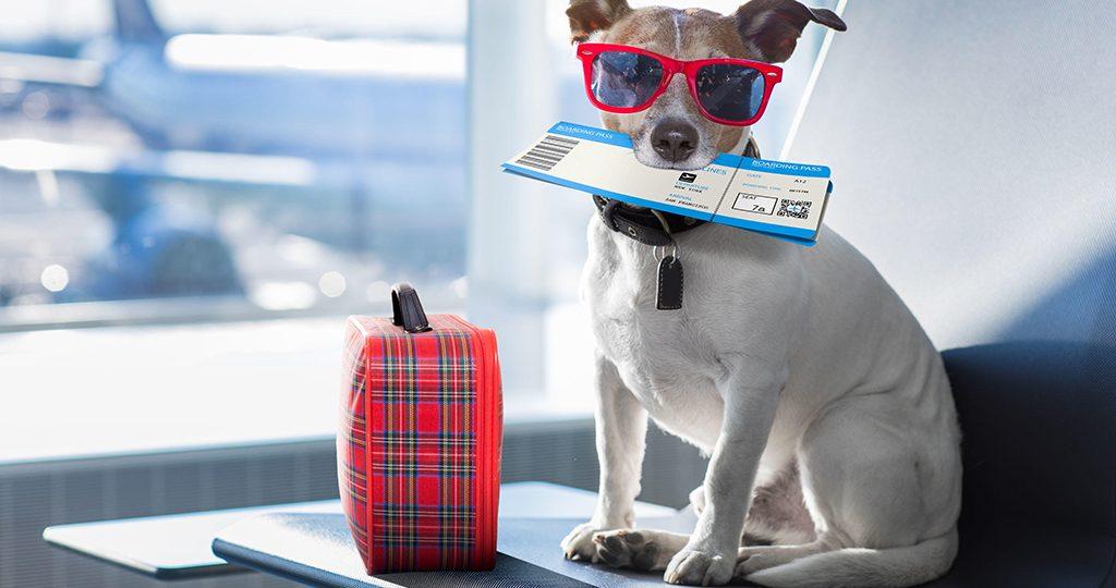 Как путешествовать с собакой – породы и список вещей