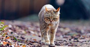 Бордетеллез у кошек – причины, симптомы и лечение