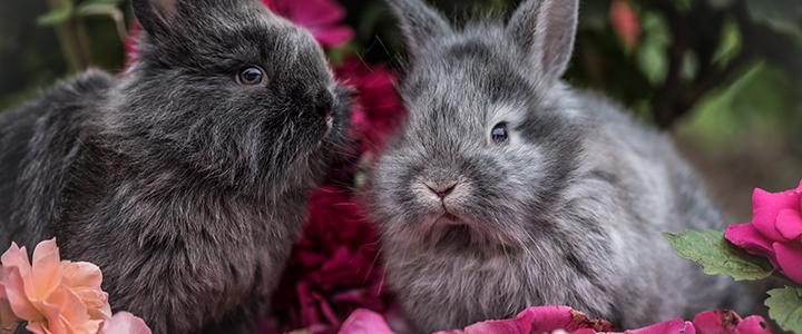 Эймериоз у кроликов паразитология