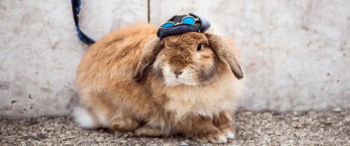 Эймериоз у кроликов лечение