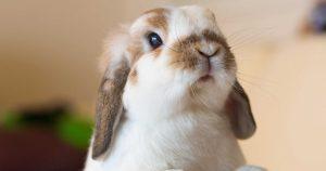 Эймериоз у кроликов – признаки, лечение и профилактика