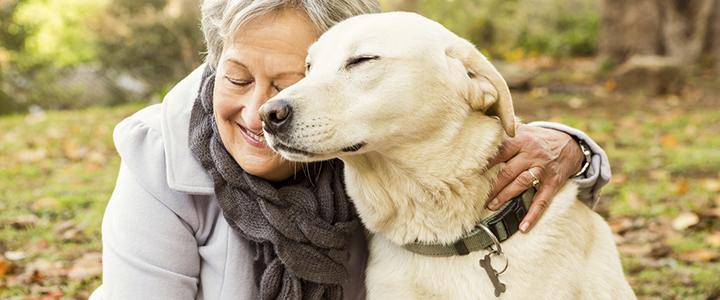 Как пережить смерть собаки