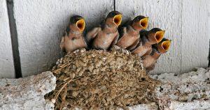 Птенец выпал из гнезда – что делать