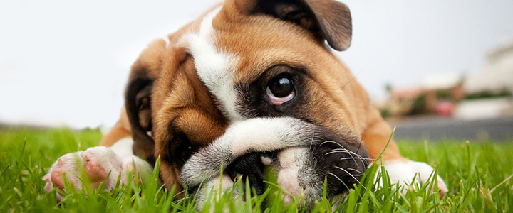 Рвота у собак