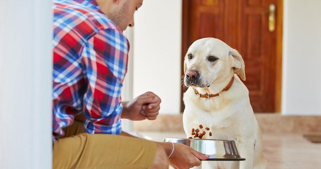 Рвота у собак – причины и лечение