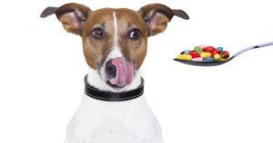 Таблетки от клещей для собак – 3 эффективных препарата