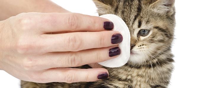 Чем промыть глаза котенку в домашних условиях