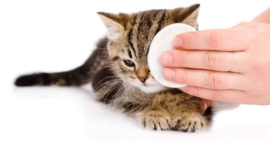 9 средств, которые помогут промыть глаза котенку