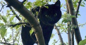 Черный кот в доме – народные поверья