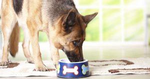 Говяжий рубец для собак – польза и рецепты
