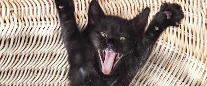 Кот орет по ночам что делать