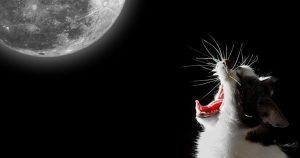 Кот орет по ночам – почему и что делать