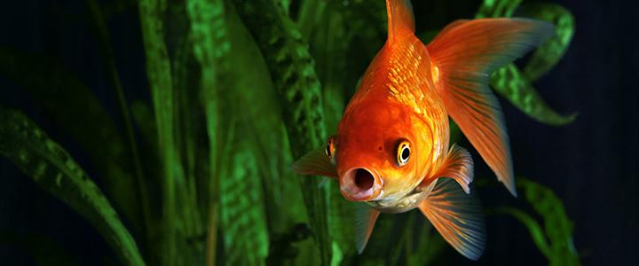 Мутнеет вода в аквариуме – что делать