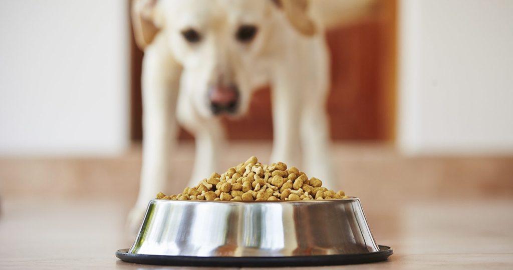 Собака не ест сухой корм – почему и что делать