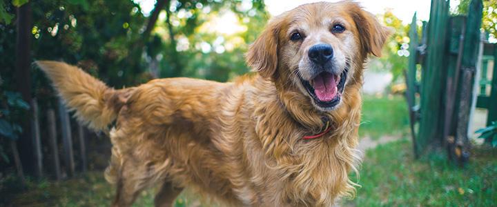 У собаки урчит в животе и понос