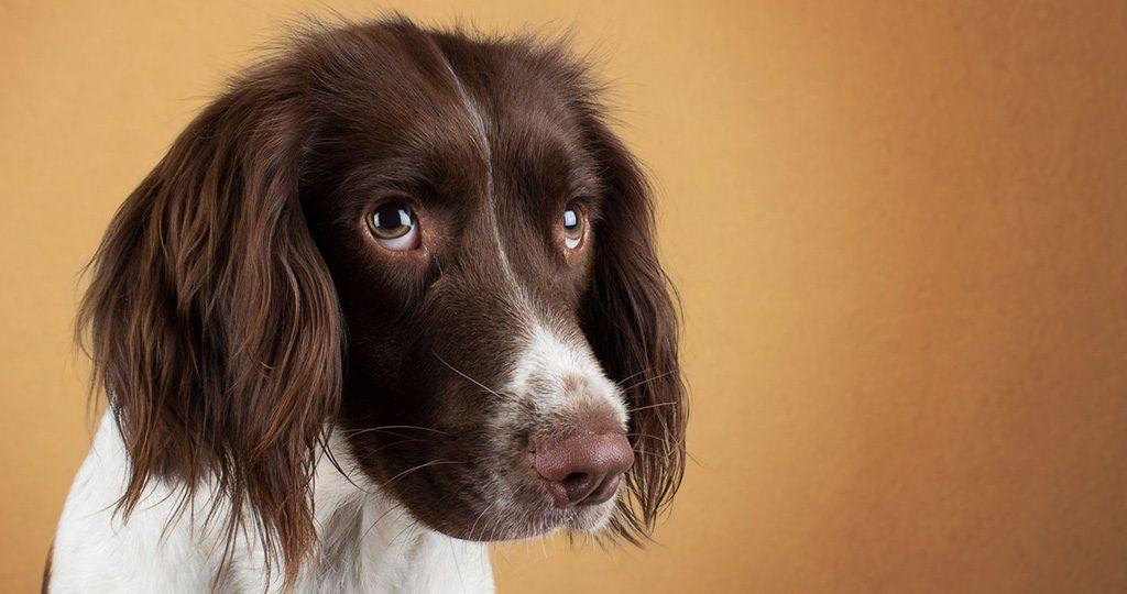 У собаки урчит в животе – причины и лечение
