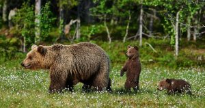 Что делать, если встретил в лесу медведя
