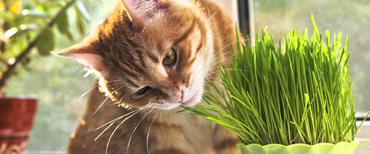 Кошка ест траву на улице