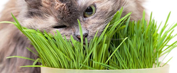 Какую траву едят коты