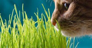 Кошка ест траву на улице – какую и зачем