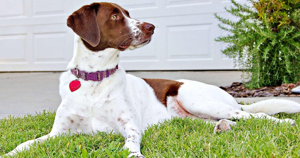 Ошейник от клещей для собак – виды и рейтинг лучших