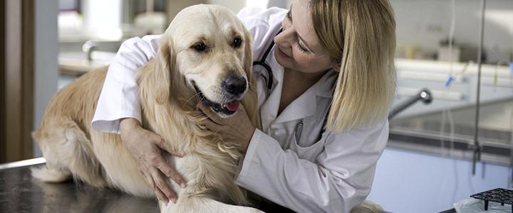 Лечение параанальных желез у собак