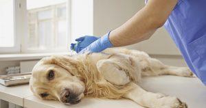 Пиометра у собак – причины и лечение опасной болезни
