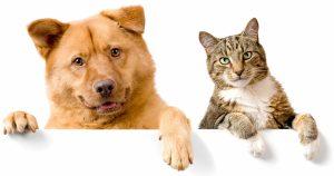 Почему собаки не любят кошек – 6 причин