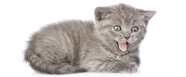 Повышенный гемоглобин у кошек