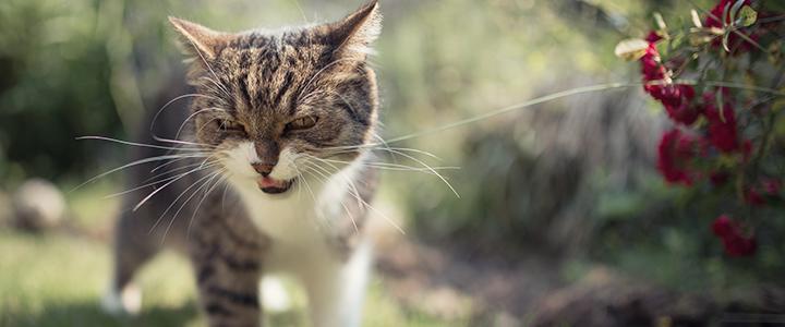 Поднялся гемоглобин у кошек