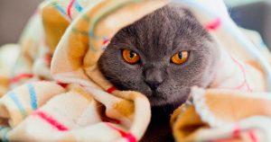 Повышенный гемоглобин у кошек – причины и лечение