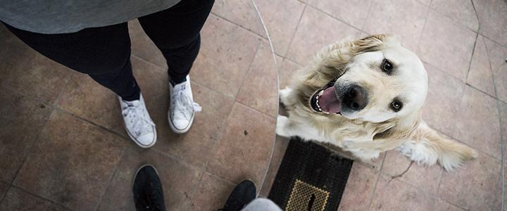 Как отучить собаку прыгать