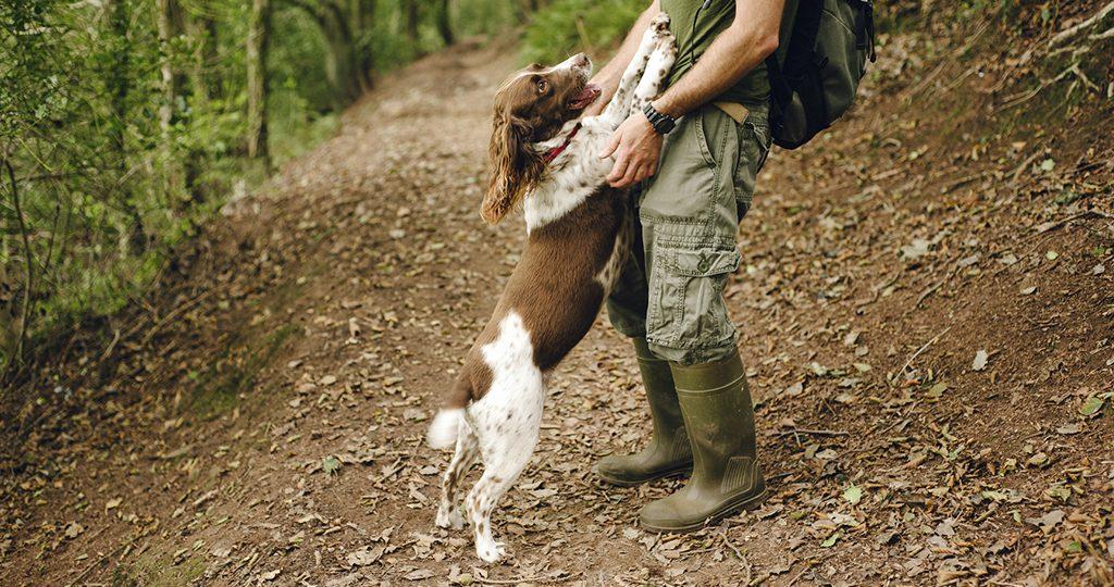 Как отучить собаку прыгать на людей – лучшие методы