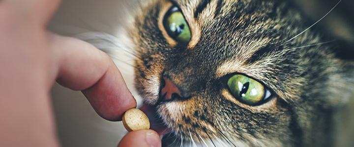 Таблетки от стригущего лишая для кошек
