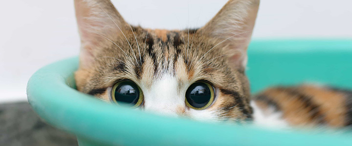 Запор у кота